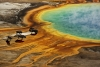 bizoni u Grand Prismatic, N.P. Yellowstone